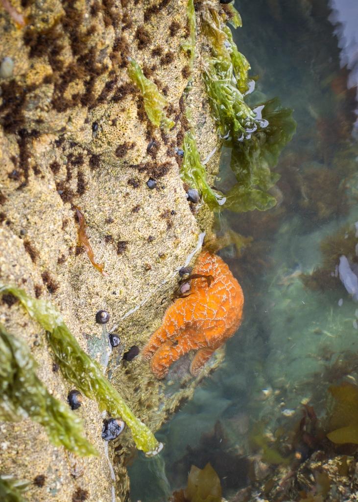 Starfish Damnation Creek Trail