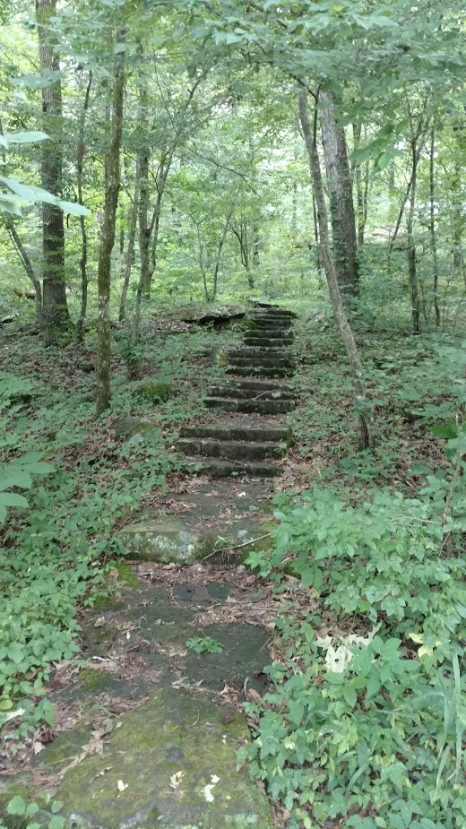 Bayou Bluff Stairs Hiking Trails Arkansas