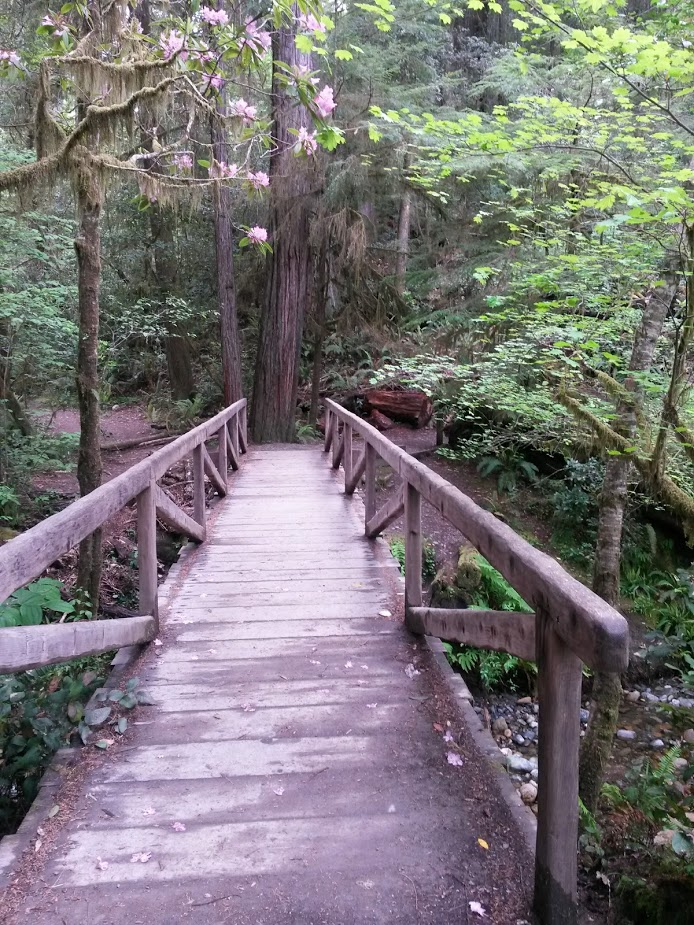 Bridge in Redwoods in California