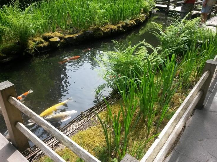 Coy Japanese Garden Oregon PDX
