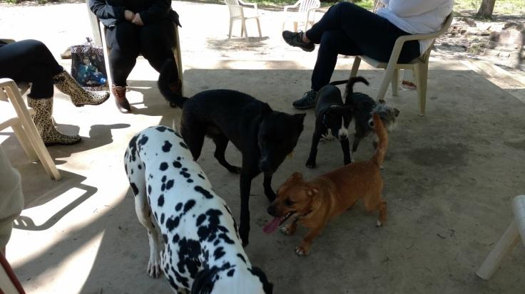 Kiroli Park Monroe LA dog park