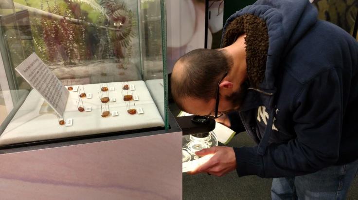 Morinventures NOLA Insectarium