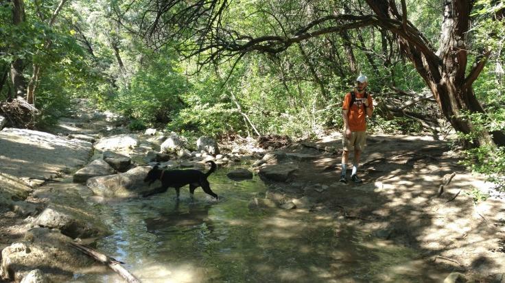 Turkey Creek Trail Austin TX Dogs