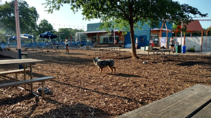 Yard Bar Dog Park Austin TX