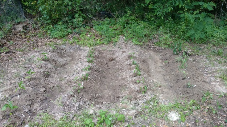 Garden Section 1 Morinventures Composting