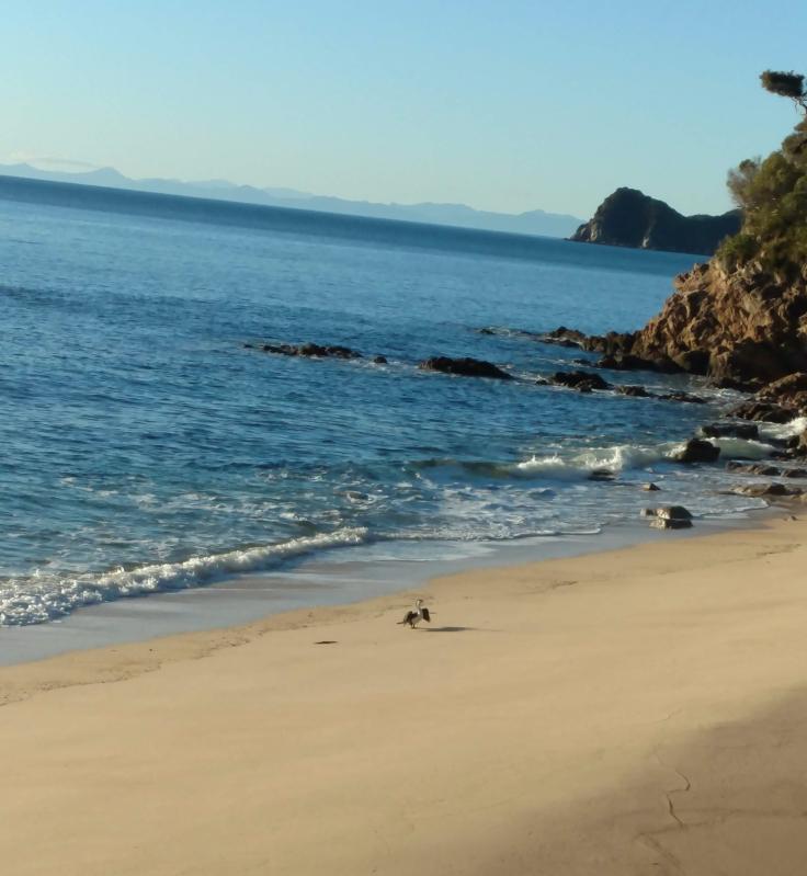 shag warming up on beach Abel Tasman Trail